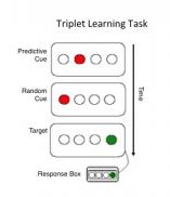 Chelsea Stillman-Triplet Learning Task