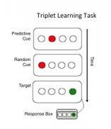 Chelsea Stillman-Triplet Learning Task