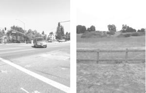 Urban vs Rural Walks